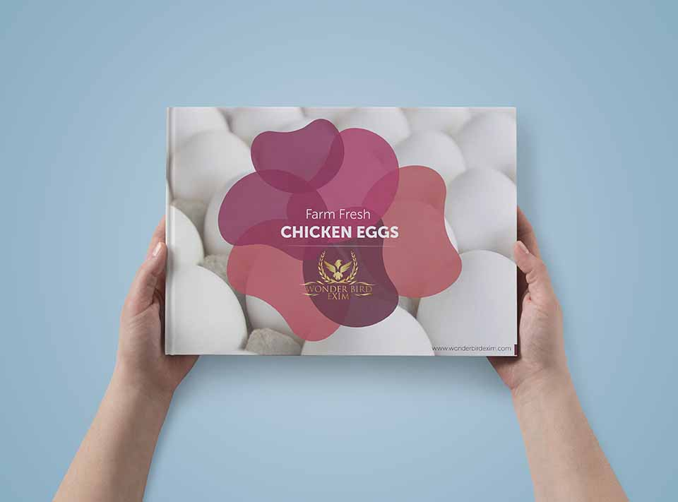 corporate Brochure Designs To Wonder Bird EXIM Eggs